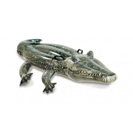 Aligator do pływania